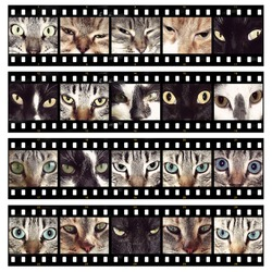 Cat eyes different images film strips background