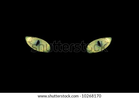 cat eyes in the dark. stock photo : Cat eyes in the Dark