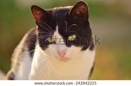 Cat Face, Cat, Cat Eye, Kitty, Cat Closeup, Cat Isolated, Cat Head