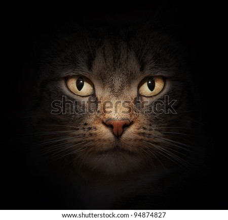 Cat face with beautiful eyes close up portrait