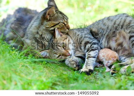 Cat family. Mother father and child.