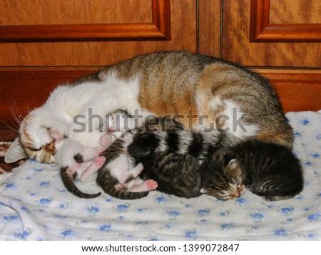 Cat feeding newly born kittens #1399072847