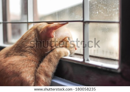 Cat feel lonely #180058235