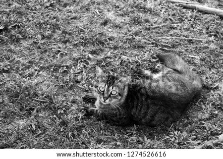 cat, feline, domestic animals #1274526616