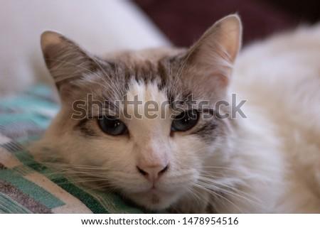 cat feline domestic pet animal #1478954516