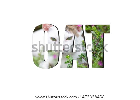 Cat font Alphabet made of picture cat and flower on white background