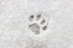 cat footprint on snow close-up selective focus