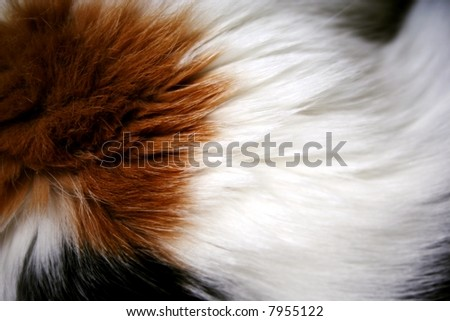 cat fur background