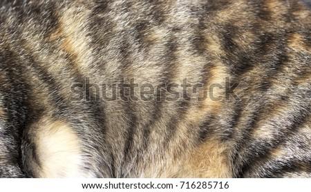 cat fur pattern
