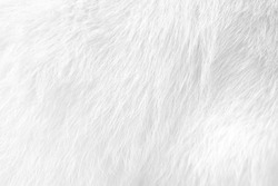 Cat fur texture , white or gray animal patterns for nature background