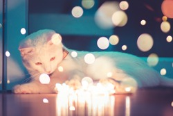 Cat garland lights bokeh