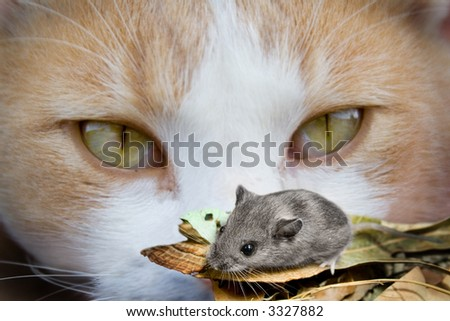 cat getting up real close to mouse lunch