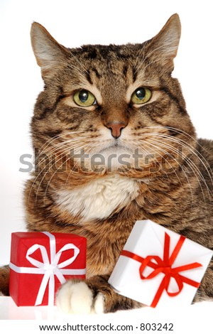 cat & gifts