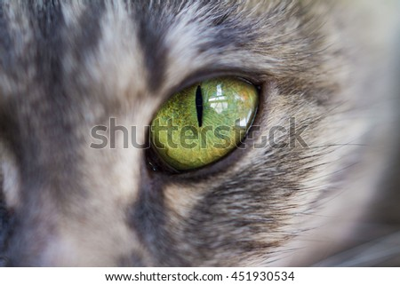 Stock Photo cat green eyes close-up