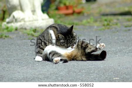 cat grooming it's self.