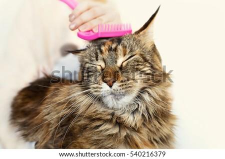 Cat grooming. Stroking cat.
