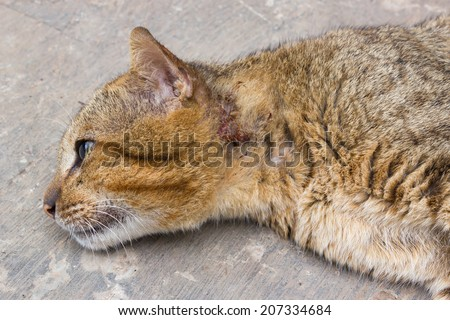Cat had injured at neck. Cat laying down on floor and looking for some thing.