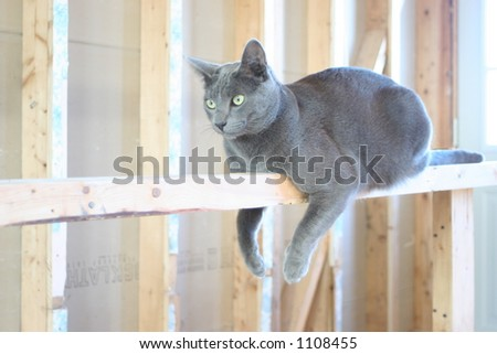 Cat Hanging Out