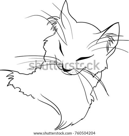 Cat 257
