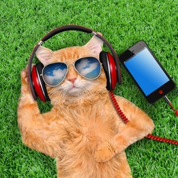 Cat headphones  wearing sunglasses relaxing in the grass.