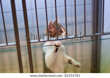 cat held in cage for experiments, looking sadly to be freed