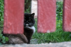 Cat hiding and looking over the fence. Yard cat behind a fence.