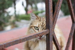 Cat Hiding Behind Rusted Fence