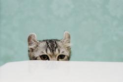 cat hiding hide seek kitten