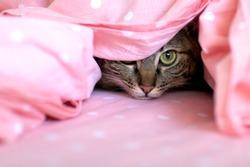 Cat hiding in bedsheets
