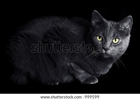 Cat Hiding in the Shadows with Glowing Eyes