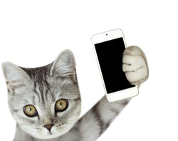 cat holding mobile phone