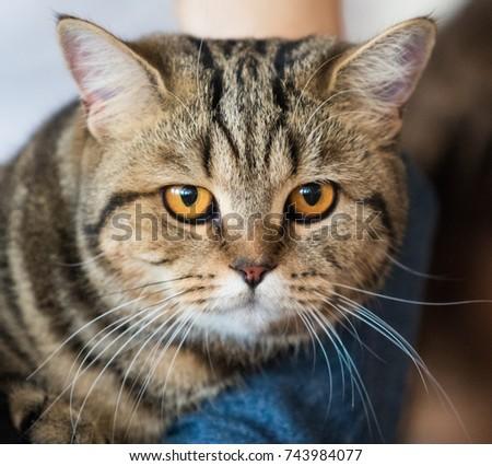 cat home close-up portrait #743984077
