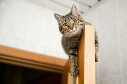 cat home sitting on top of the open wooden doors of oak veneer on a background of blurred walls and ceiling