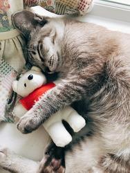 Cat hug a bear doll sleep in afternoon