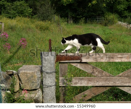 Cat hunting on a farm fence