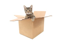Cat in a box