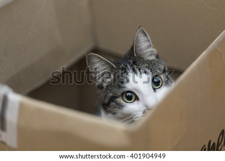 Stock Photo cat in a box