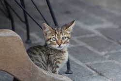 cat in a cafe under a table , kitten, kitty looking camera, stray cats in street, urban homeless animals in city life background istanbul turkey background