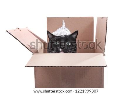 Cat in a cardboard box wearing a foil hat