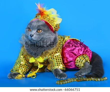Cat in a carnival costume.