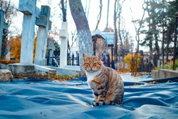 cat in a cemetery among the graves
