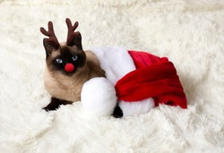 Cat in a Christmas costume.
