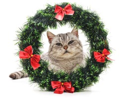 Cat in a Christmas wreath isolated on a white background.