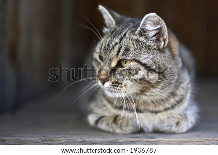 Cat in a country house - stock photo