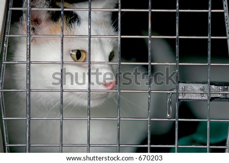 Cat in a crate or cage.