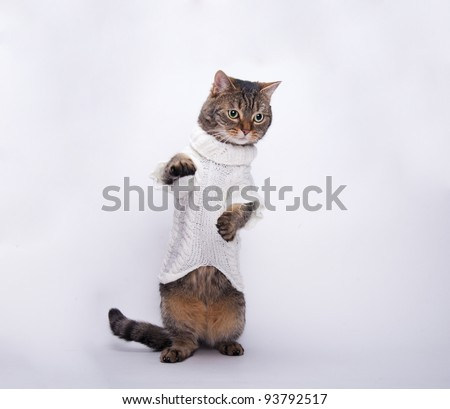 cat in a dress