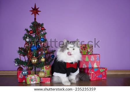 cat in a knitted sweater with gifts at Christmas tree
