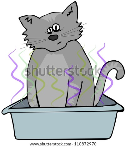 Cat in a litter box