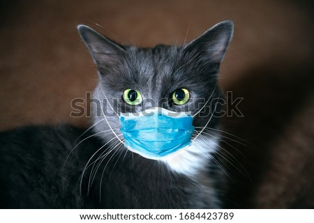 Cat in a medical mask. Protective antiviral mask on the cats face, Protective face mask for animals.  COVID-19, Coronovirus, hantavirus concept. Medical mask from coronavirus,  hantavirus.