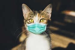 Cat in a medical mask. Protective antiviral mask on the domestic animal face. Stay home COVID-19 virus concept